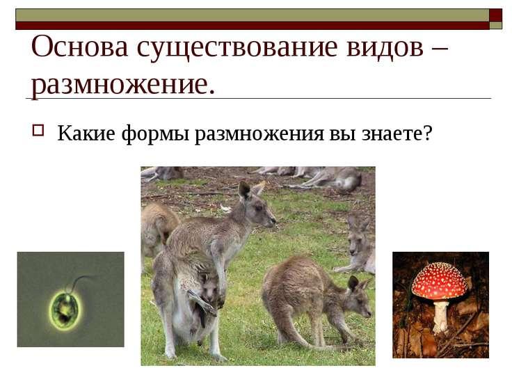 Основа существование видов – размножение. Какие формы размножения вы знаете?