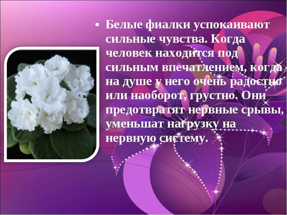 Белые фиалки успокаивают сильные чувства. Когда человек находится под сильным...