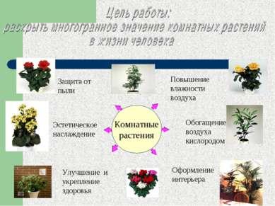 Комнатные растения Комнатные растения Защита от пыли Повышение влажности возд...