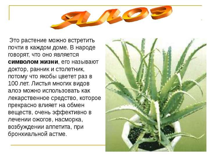 Это растение можно встретить почти в каждом доме. В народе говорят, что оно я...