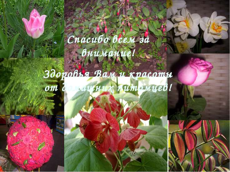 Спасибо всем за внимание! Здоровья Вам и красоты от домашних питомцев!