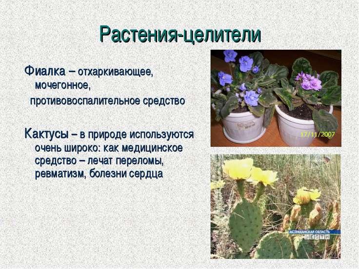 Растения-целители Фиалка – отхаркивающее, мочегонное, противовоспалительное с...