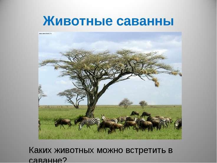 Животные саванны Каких животных можно встретить в саванне?