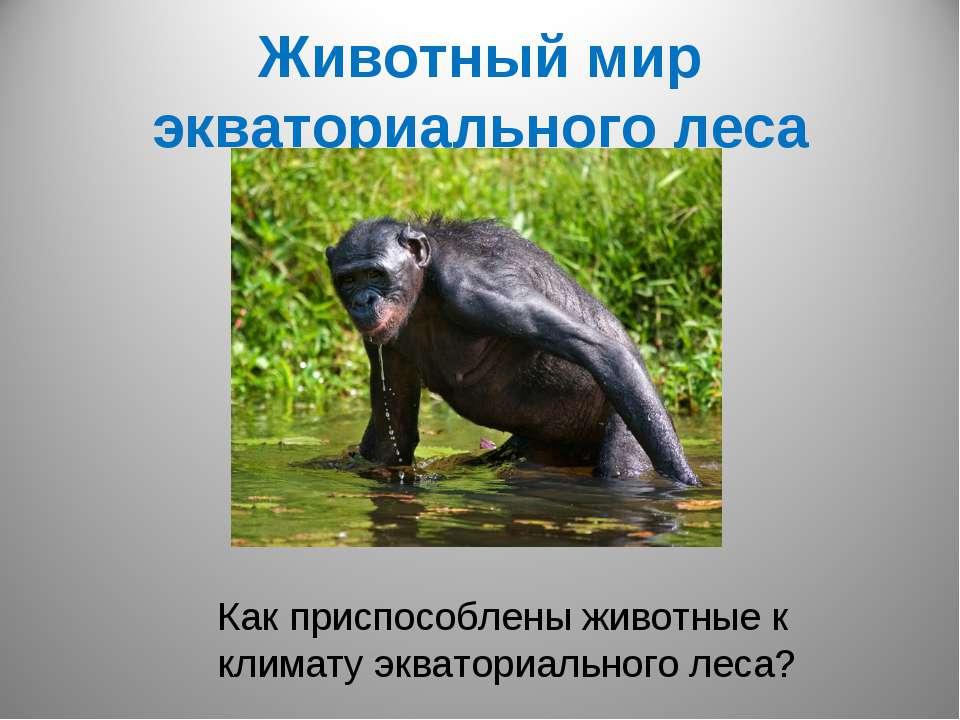 Животный мир экваториального леса Как приспособлены животные к климату эквато...