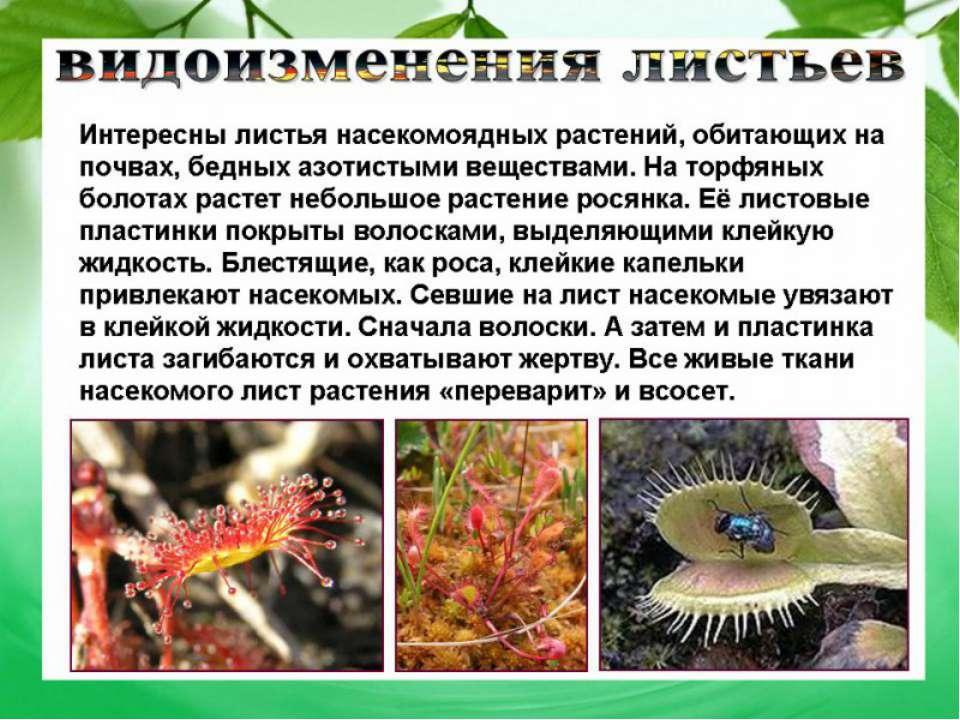 Рефераты на тему биология страница  Реферат на тему лист биология
