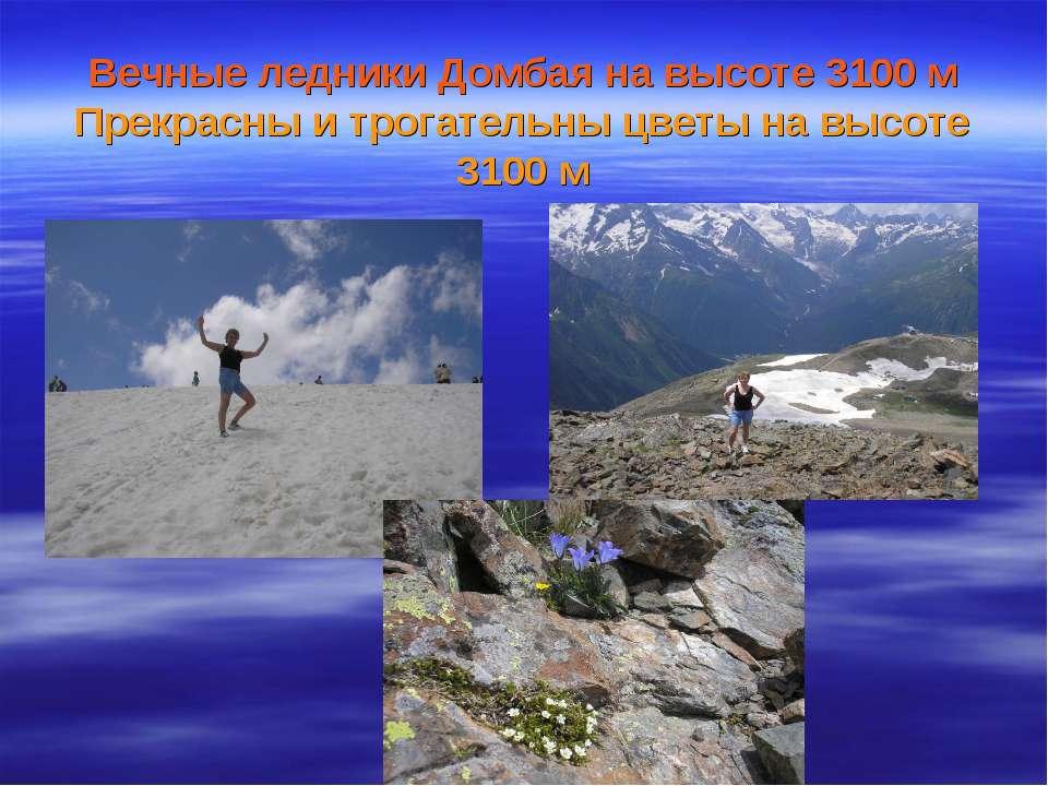 Вечные ледники Домбая на высоте 3100 м Прекрасны и трогательны цветы на высот...