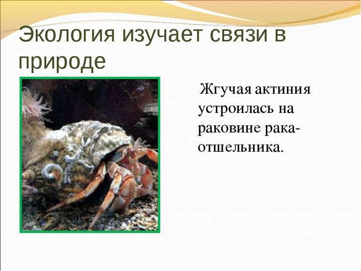 Экология изучает связи в природе Жгучая актиния устроилась на раковине рака-о...