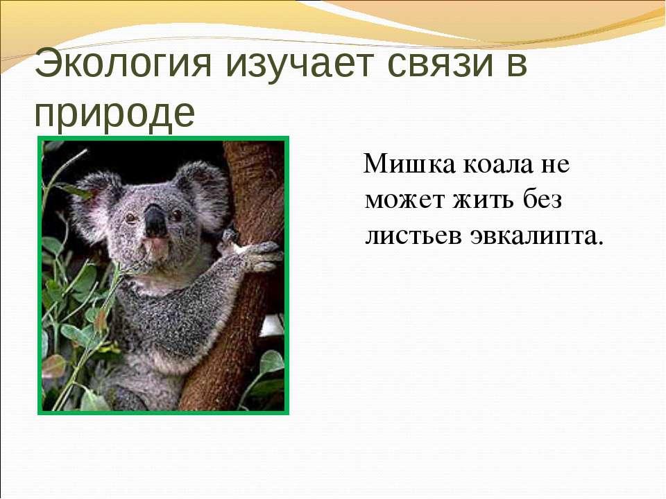 Экология изучает связи в природе Мишка коала не может жить без листьев эвкали...