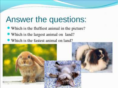 Which is the fluffiest animal in the picture? Which is the fluffiest animal i...