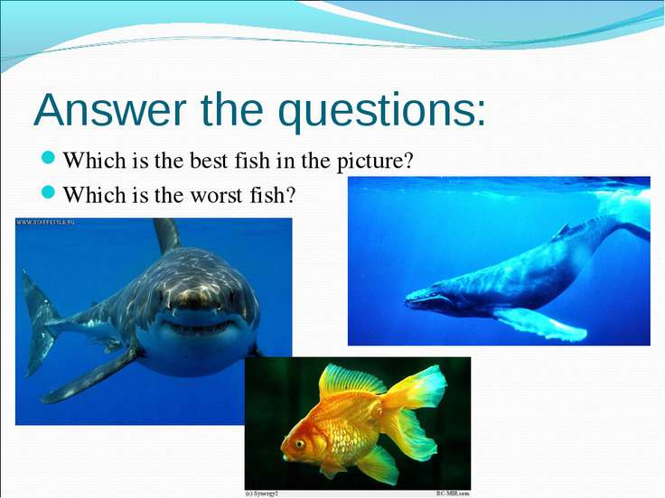 Which is the best fish in the picture? Which is the best fish in the picture?...