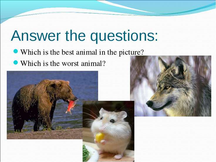 Which is the best animal in the picture? Which is the best animal in the pict...