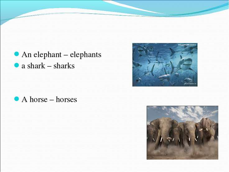 An elephant – elephants An elephant – elephants a shark – sharks A horse – ho...