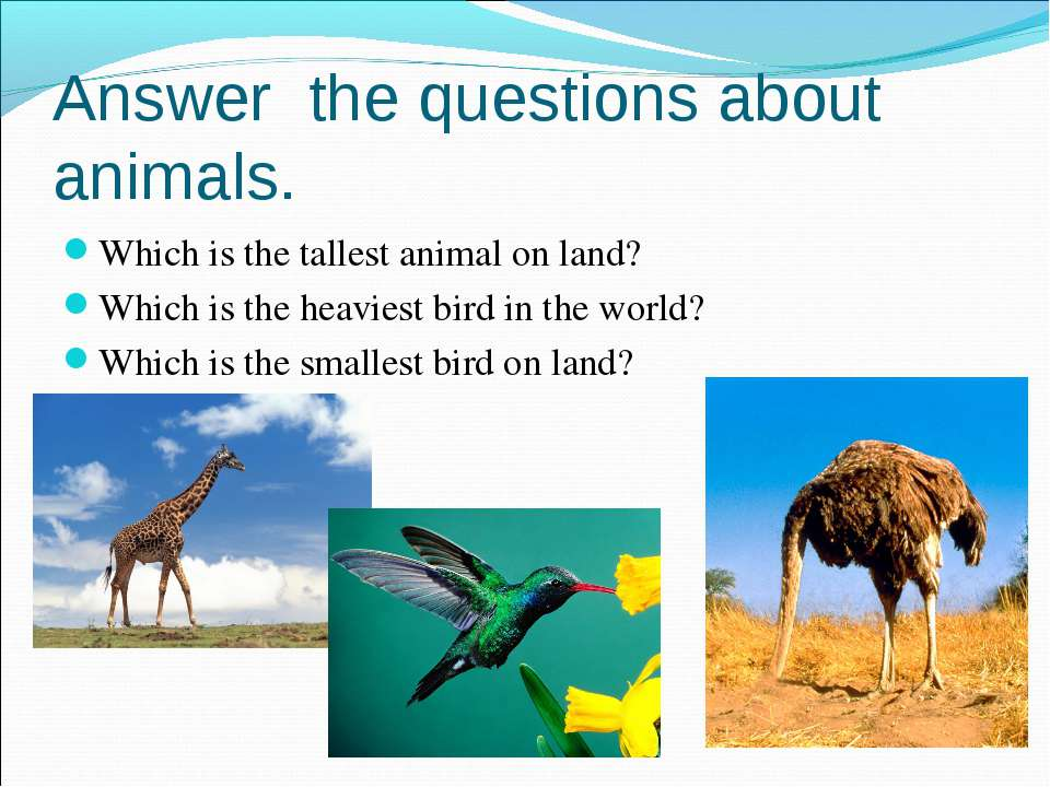 Which is the tallest animal on land? Which is the tallest animal on land? Whi...