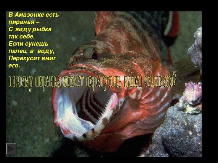 В Амазонке есть пиранья – С виду рыбка так себе. Если сунешь палец в воду, Пе...