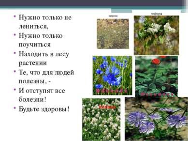 Нужно только не лениться, Нужно только поучиться Находить в лесу растении Те,...