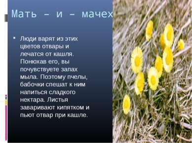 Мать – и – мачеха. Люди варят из этих цветов отвары и лечатся от кашля. Понюх...