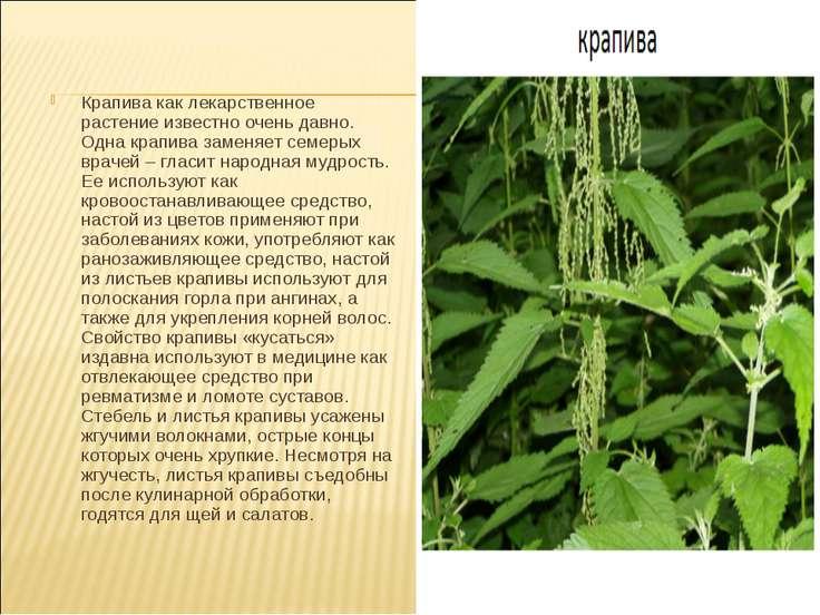 Крапива как лекарственное растение известно очень давно. Одна крапива заменяе...