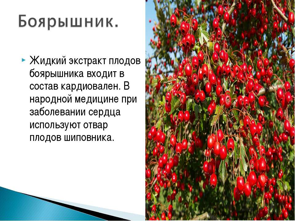 Жидкий экстракт плодов боярышника входит в состав кардиовален. В народной мед...