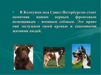 В Колтушах под Санкт-Петербургом стоит памятник нашим верным фронтовым помощн...