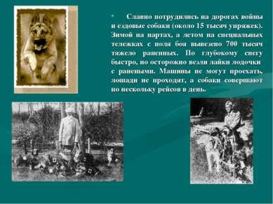 Славно потрудились на дорогах войны и ездовые собаки (около 15 тысяч упряжек)...