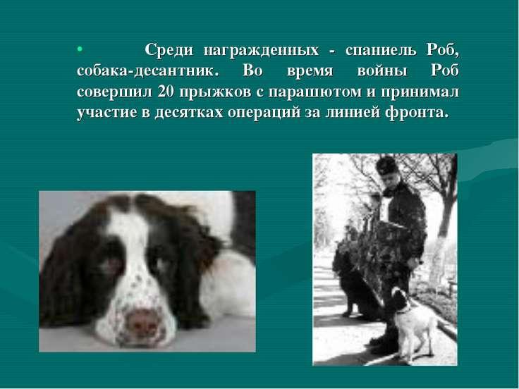 Среди награжденных - спаниель Роб, собака-десантник. Во время войны Роб совер...