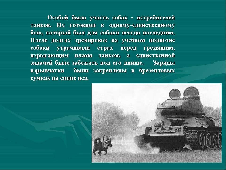 Особой была участь собак - истребителей танков. Их готовили к одному-единстве...