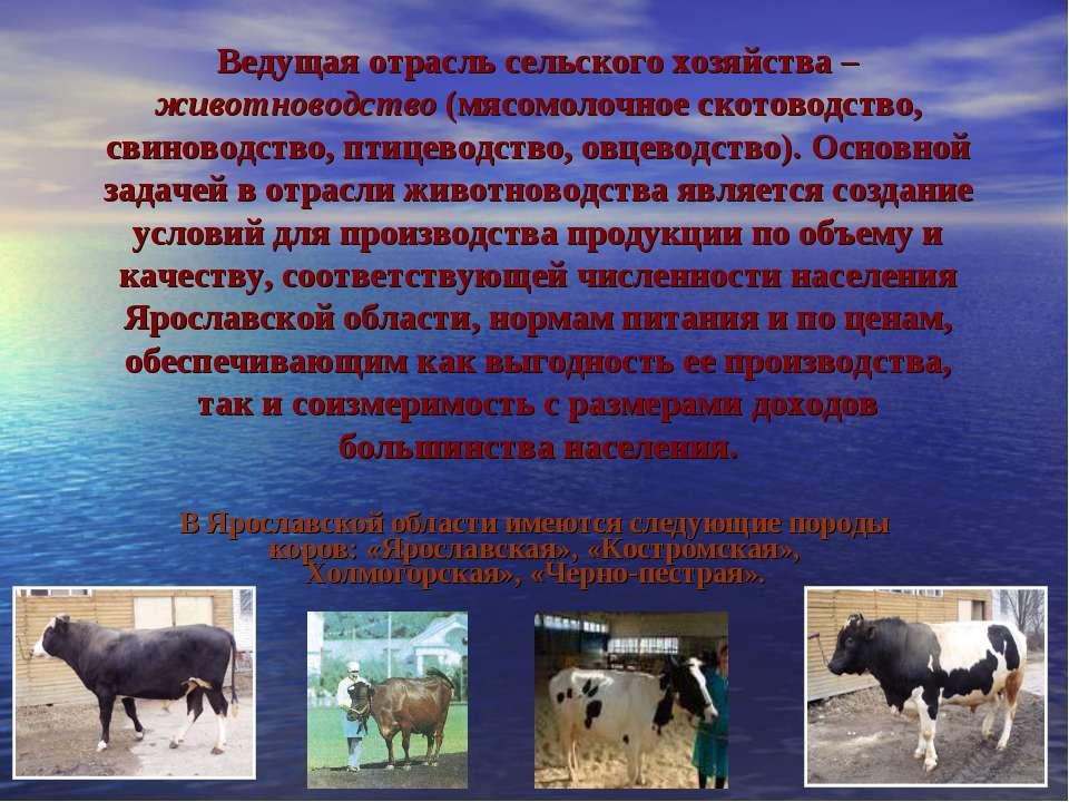 Ведущая отрасль сельского хозяйства – животноводство (мясомолочное скотоводст...