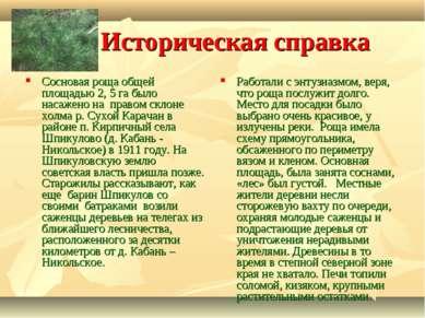 Историческая справка Сосновая роща общей площадью 2, 5 га было насажено на пр...