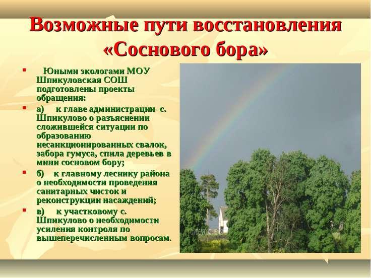 Возможные пути восстановления «Соснового бора»  Юными экологами МОУ Шпикуло...