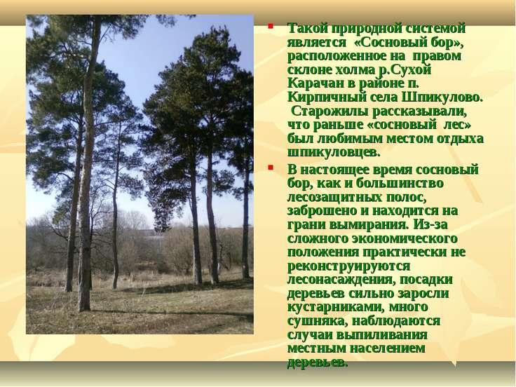 Такой природной системой является «Сосновый бор», расположенное на правом скл...