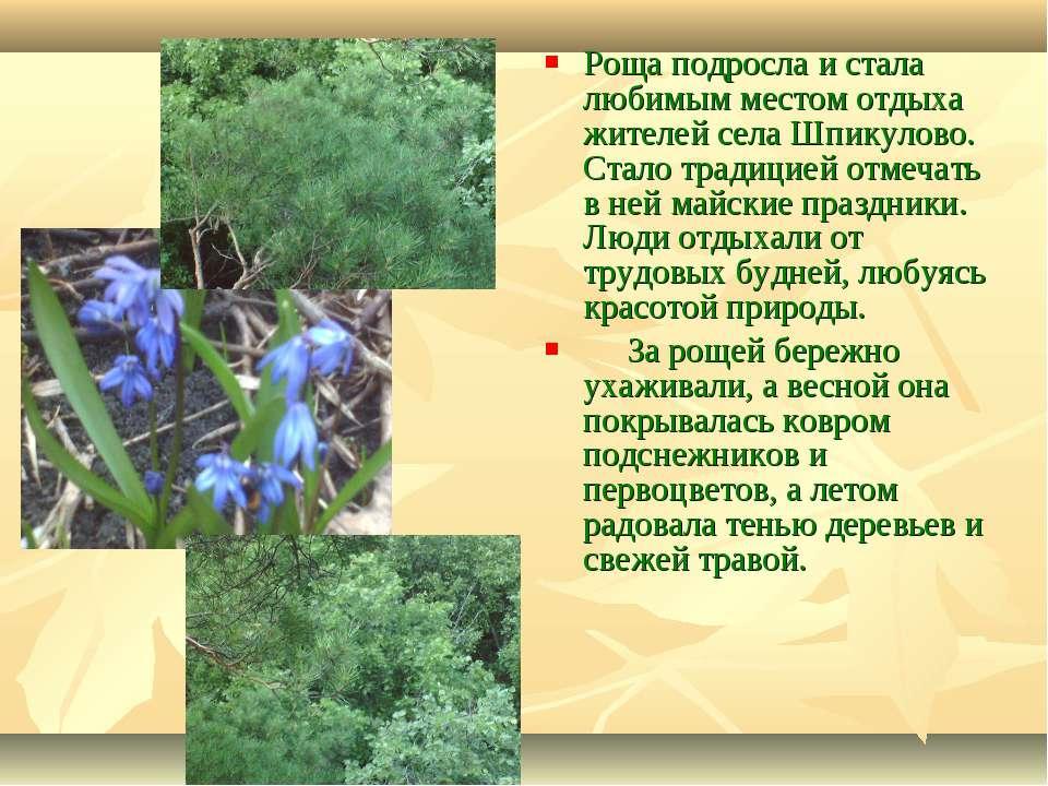 Роща подросла и стала любимым местом отдыха жителей села Шпикулово. Стало тра...