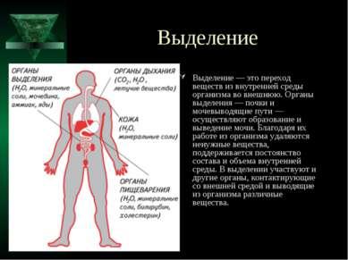 Выделение Выделение — это переход веществ из внутренней среды организма во вн...