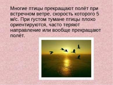 Многие птицы прекращают полёт при встречном ветре, скорость которого 5 м/с. П...