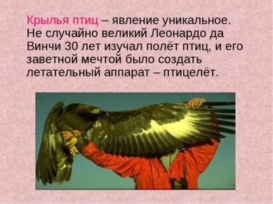 Крылья птиц – явление уникальное. Не случайно великий Леонардо да Винчи 30 ле...