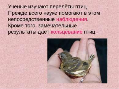 Ученые изучают перелёты птиц. Прежде всего науке помогают в этом непосредстве...
