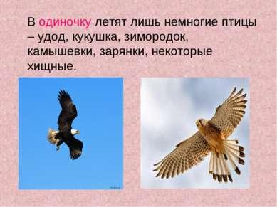 В одиночку летят лишь немногие птицы – удод, кукушка, зимородок, камышевки, з...