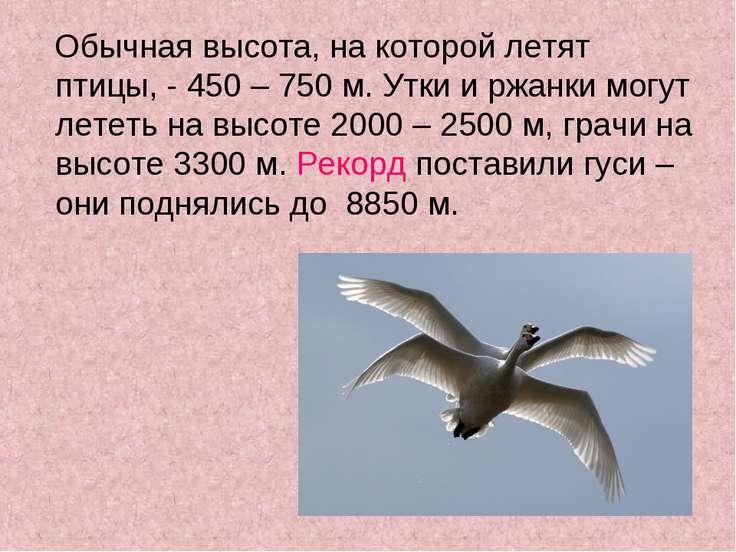Обычная высота, на которой летят птицы, - 450 – 750 м. Утки и ржанки могут ле...