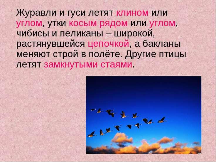 Журавли и гуси летят клином или углом, утки косым рядом или углом, чибисы и п...