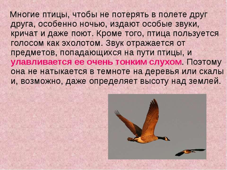 Многие птицы, чтобы не потерять в полете друг друга, особенно ночью, издают о...