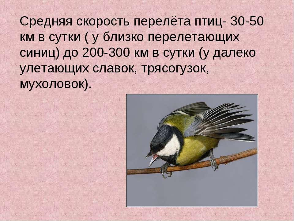 Средняя скорость перелёта птиц- 30-50 км в сутки ( у близко перелетающих сини...