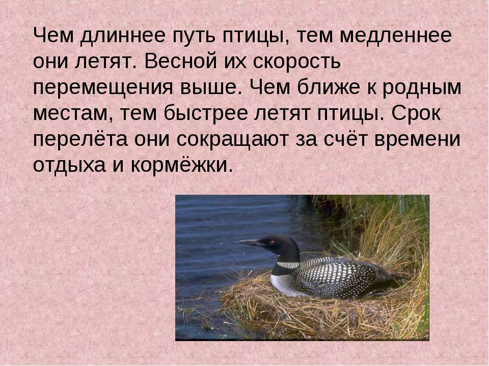 Чем длиннее путь птицы, тем медленнее они летят. Весной их скорость перемещен...