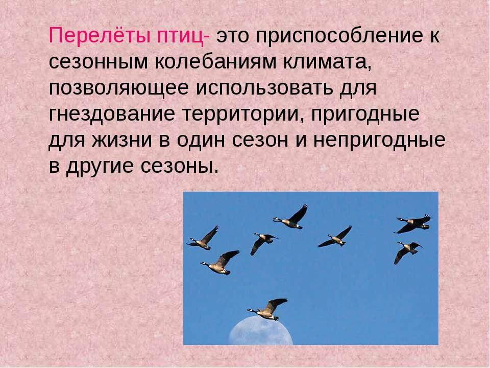 Перелёты птиц- это приспособление к сезонным колебаниям климата, позволяющее ...