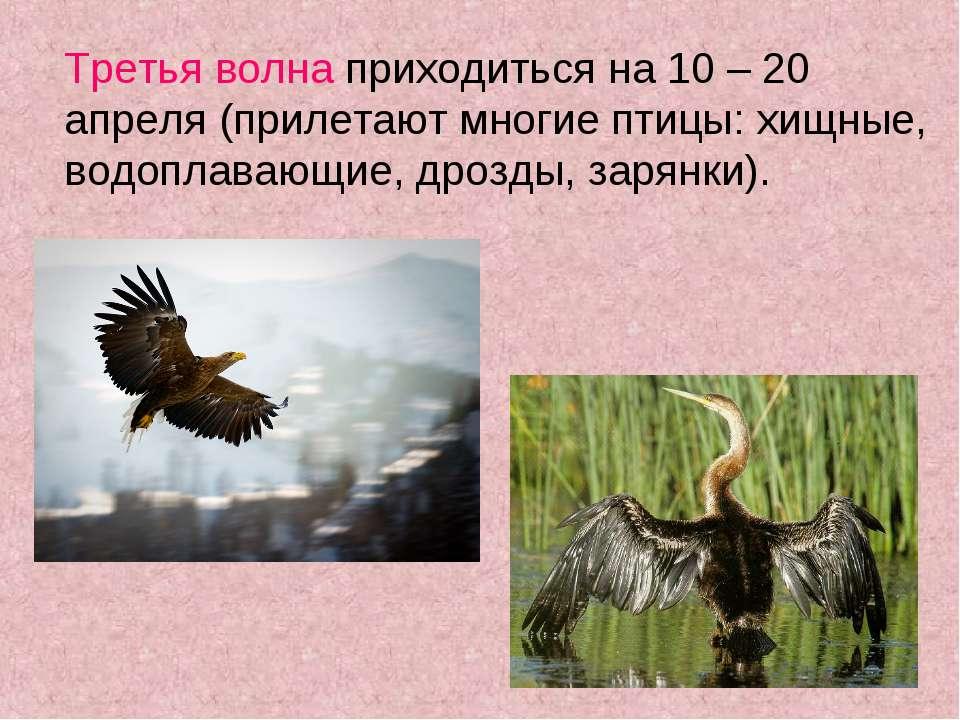 Третья волна приходиться на 10 – 20 апреля (прилетают многие птицы: хищные, в...