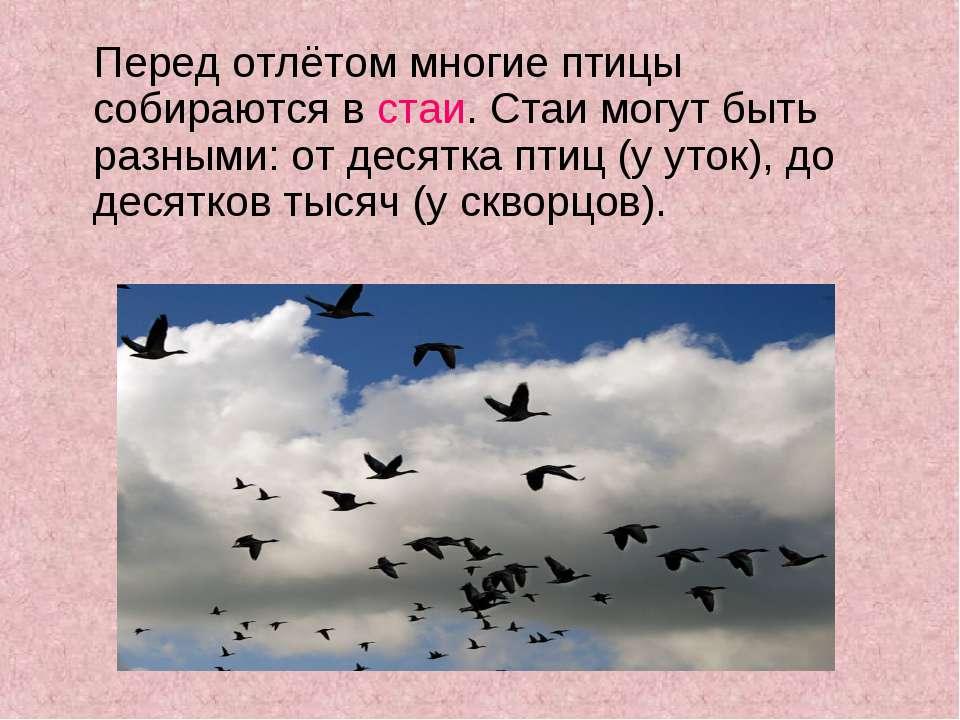 Перед отлётом многие птицы собираются в стаи. Стаи могут быть разными: от дес...