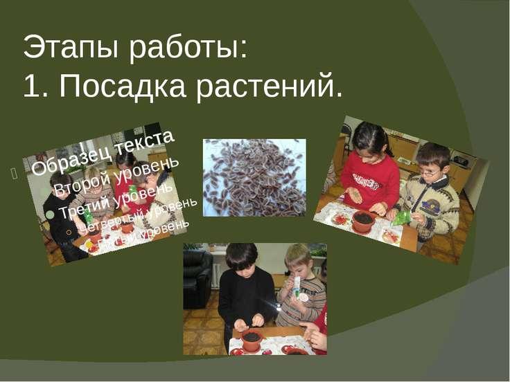 Этапы работы: 1. Посадка растений.