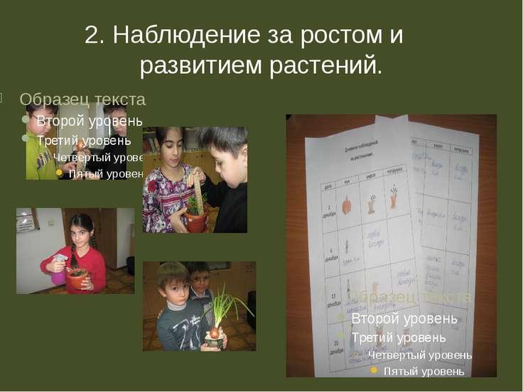 2. Наблюдение за ростом и развитием растений.