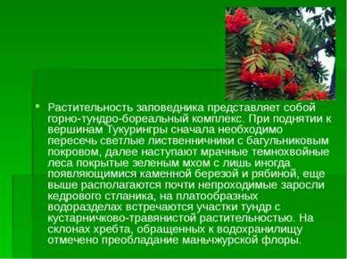 Растительность заповедника представляет собой горно-тундро-бореальный комплек...