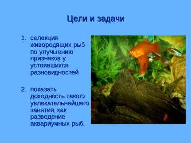 Цели и задачи селекция живородящих рыб по улучшению признаков у устоявшихся р...