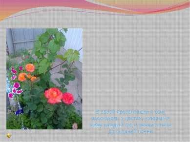 В своей презентации я хочу рассказать о цветах, которые я вижу каждый год с р...