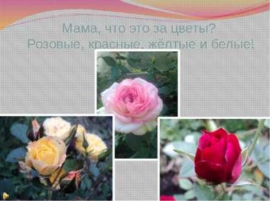 Мама, что это за цветы? Розовые, красные, жёлтые и белые!